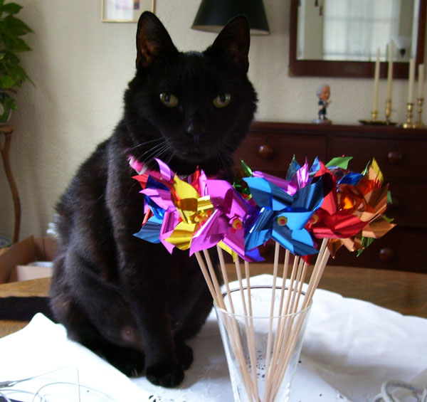 Betty the cat with pinwheels