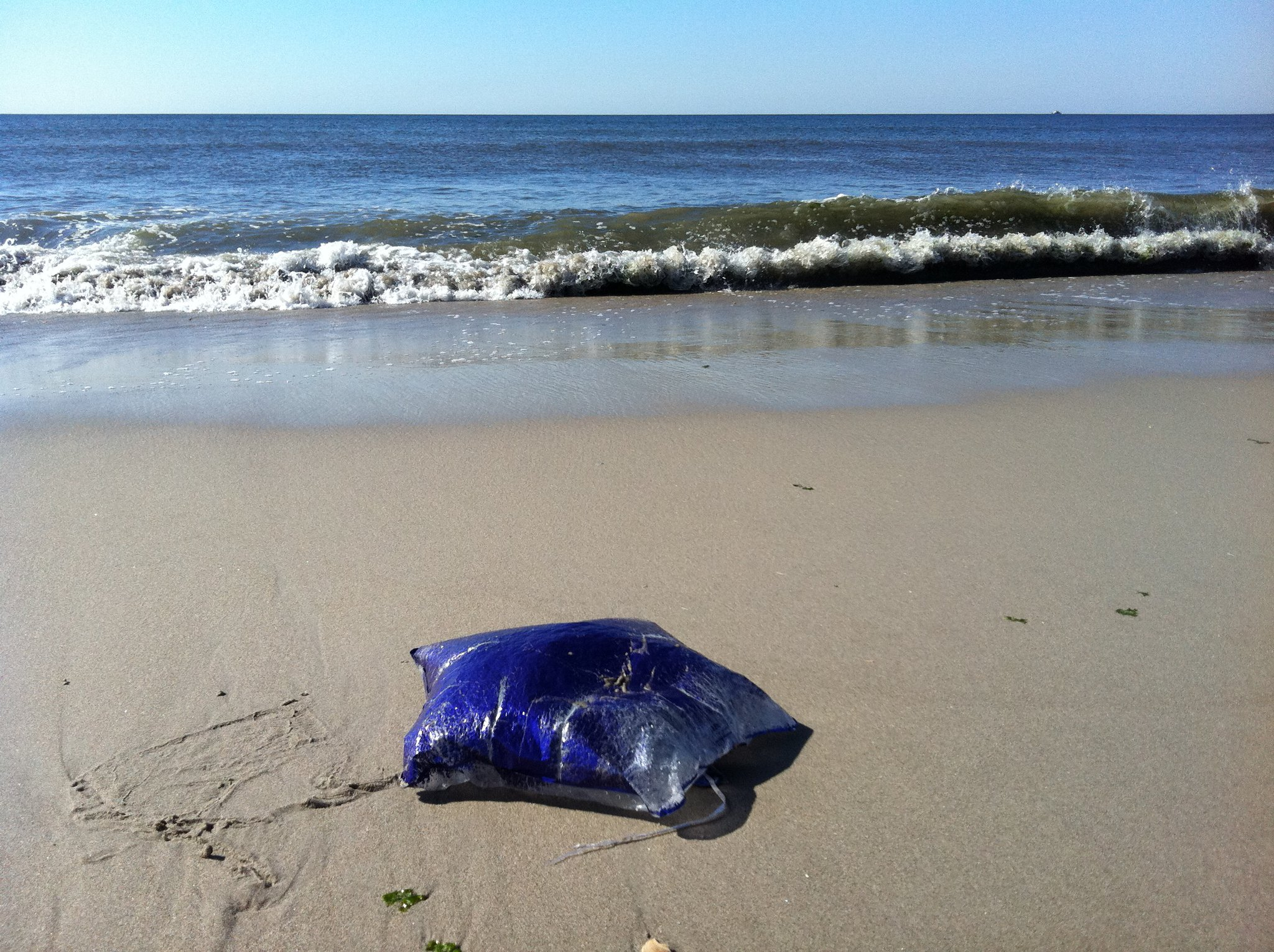 deadly jelly on Rockaway Beach