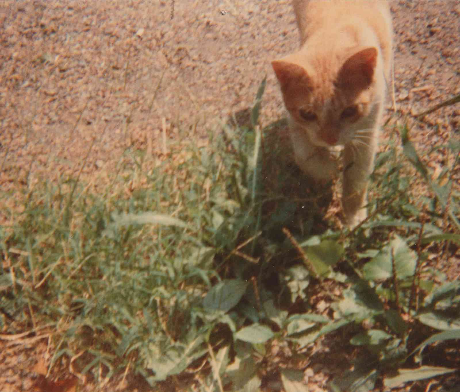 Jack the Cat in the yard